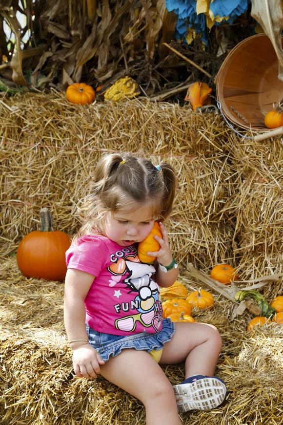 pumpkinpatch-52_online