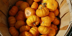 pumpkinpatch-56_slider